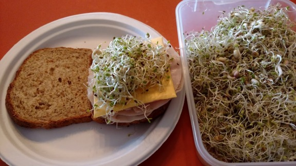 Sprout Sandwich