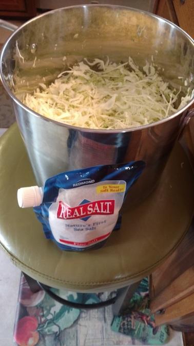 1 Head of Shredded Cabbage plus 1 Table Spoon Real Sea Salt